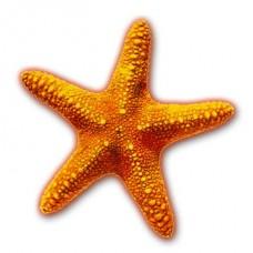 Морские звезды, улитки и моллюски